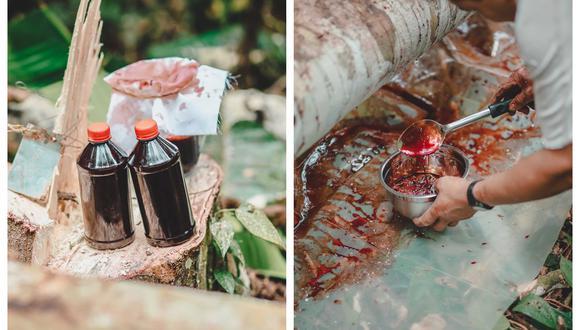 Por estos días se viene realizando una investigación de campo en la comunidad de Yurilamas para fortalecer los conocimientos en el manejo sostenible de la sangre de grado. (Fotos: Rainforest Alliance ©)