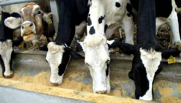 La empresa tiene un establo en Huaral de donde obtiene la leche que venden.