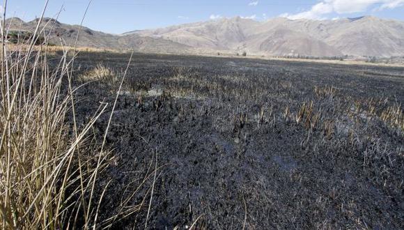 Cusco: fuego consumió tercera parte de totorales de Huacarpay