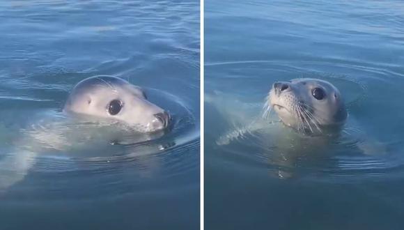 La foca, de nombre Eliza, suele acercarse a las personas que atraviesan el lago en botes o en un kayak. (Foto: @irisrainbow_ | Instagram)