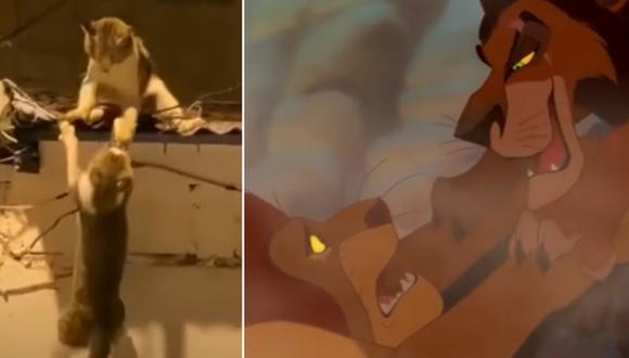 Dos gatos recrearon una escena de 'El rey león' al pelear en el techo de una casa. (Foto: rememezcla latam en YouTube / Disney)