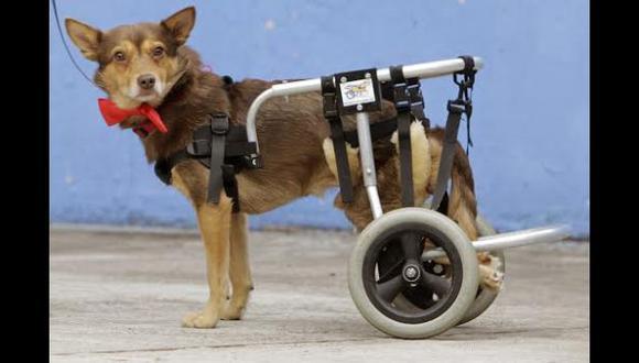 Perros pobres se atienden gratis en hospitales de Brasil