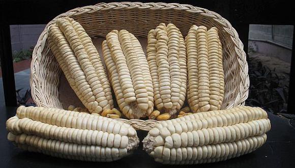 España es el principal comprador del maíz gigante del Cusco
