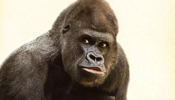 Un gorila se mostró incómodo al ser observado por los visitantes de un zoológico y no dudó en darles un susto | Foto: Pixabay / Sponchia / Referencial
