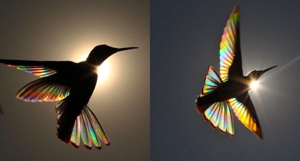 Estas son algunas de las fotografías que Charles Spencer le tomó al colibrí con el efecto 'arco iris' y se hicieron virales en las redes sociales. (Foto: Charles Spencer Instagram)
