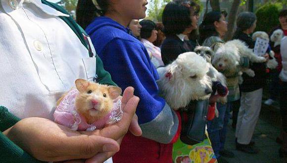 Las mascotas tienen a su disposición cada vez más servicios.