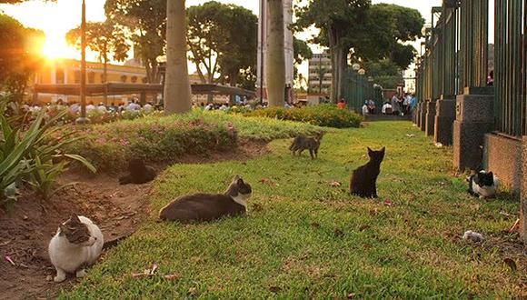 Gatos en Parque Universitario: Lima realiza control sanitario