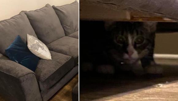 Un gato estaba en el interior de un sofá de segunda mano que una mujer compró. (Foto: Caylee Gilson / Facebook)