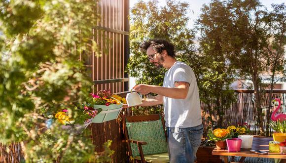 La arquitecta Karím Chaman considera fundamental ambientar el hogar con plantas, pues lo oxigenan y otorgan bienestar físico y mental.  / Foto: Shutterstock.