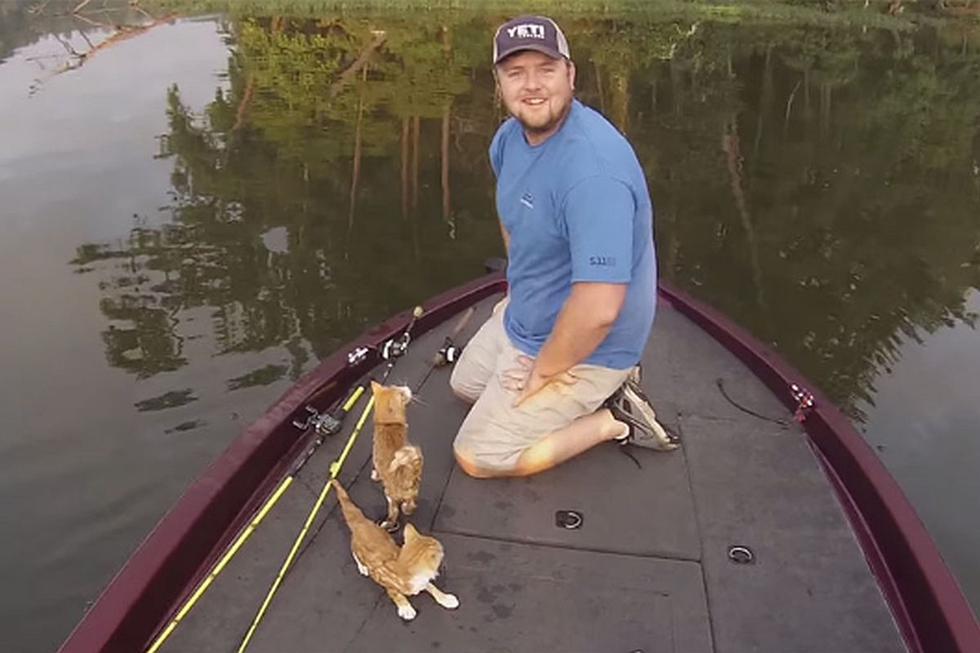 No te pierdas este video viral que muestra el impactante momento en que dos gatitos fueron salvados por un par de pescadores en un río.. (Foto: The Epoch Times en Facebook)