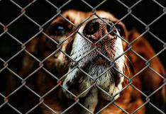 WhatsApp: policías rescatan a un perro amarrado y video enternece a los usuarios