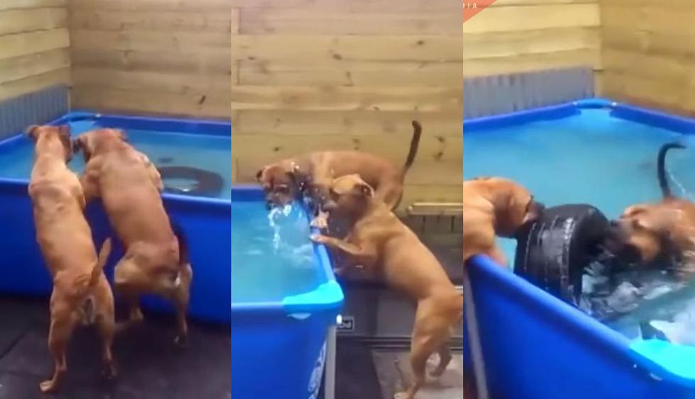 El video de Facebook mostró el ingenio de los dos perros bóxer de México y generó miles de risas hasta volverse viral entre los usuarios de las redes sociales. (Foto: Captura)