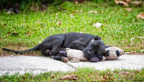 Esta fotografía del perro abrazando a un oso de peluche ha dado la vuelta al mundo. (Foto: Yvette Rescuer Facebook)