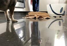 Limpiar tu casa podría estar afectando a tu mascota