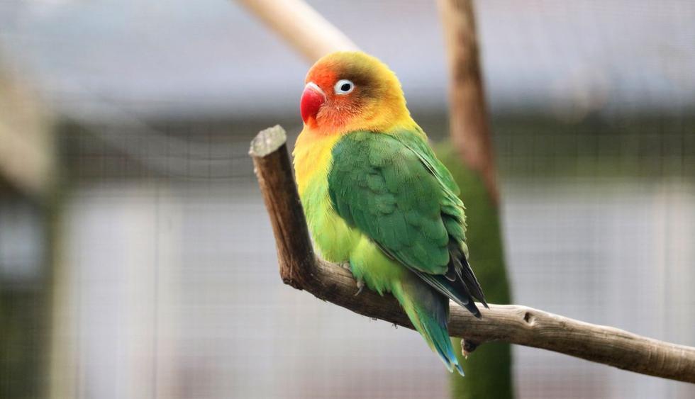 La pequeña ave ha dejado sin palabras a miles en redes sociales por su peculiar acción. (Foto: Pixabay)