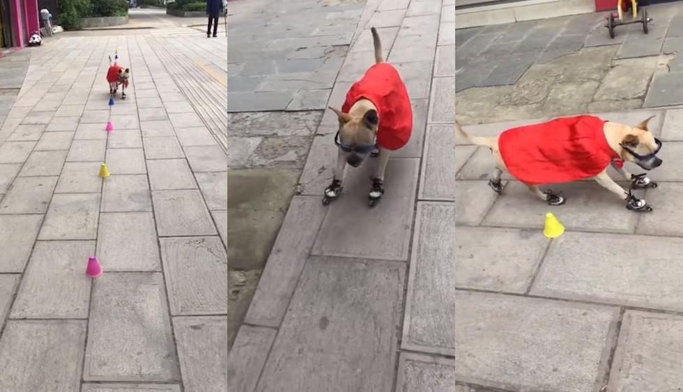 Un video llegó a Facebook desde China con un perro de raza Duoduo que fue captado dando un espectáculo subido sobre unos patines. La reacción del público hizo viral al clip audiovisual. (Foto: Captura)
