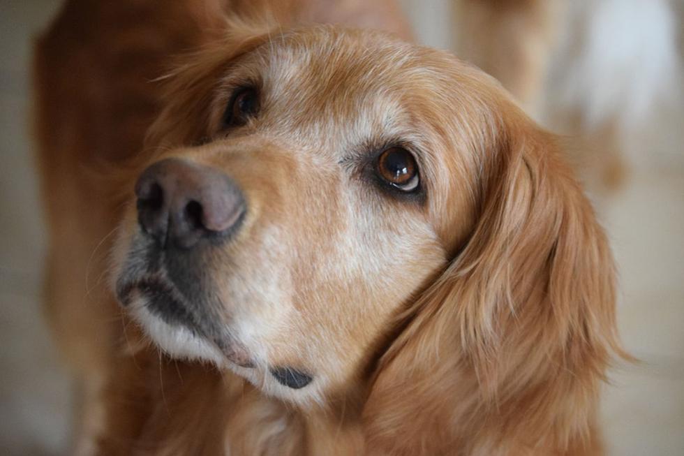 El perro vio todo lo que pasó y adoptó un comportamiento inesperado. (Pixabay)