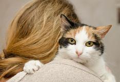 Gato cautiva a su dueña con sorpresivo gesto y deja boquiabiertos a miles de usuarios en Facebook