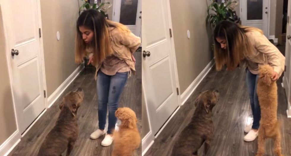 Mujer regañando a su perro de raza pitbull por haberse escapado de casa. (Foto: Captura de video de Facebook)