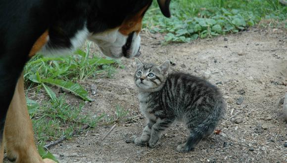 Se viralizó en Facebook el instante en que un gato finge ser una estatua para golpear a un perro. (Foto: Referencial/Pixabay)