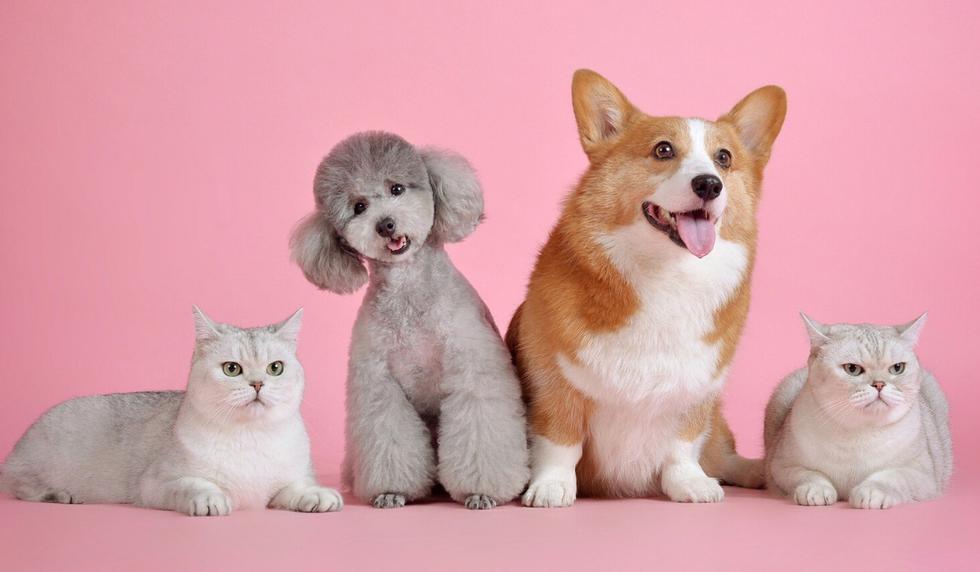 """Una amante de los animales logró juntar a sus 17 mascotas para un """"retrato familiar"""". (Foto: Pixabay/Referencial)"""