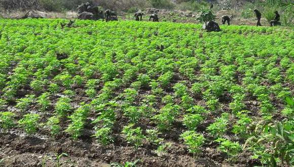 En el lugar de la operación, las autoridades encontraron cuatro áreas de siembra de marihuana. Los lugares de siembra estaban rodeados por chozas rústicas. (Foto: Mininter)