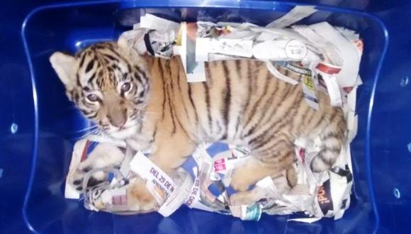 Hallan a cachorro de tigre bengala que iba a ser enviado por avión. (Foto: Captura de Facebook)