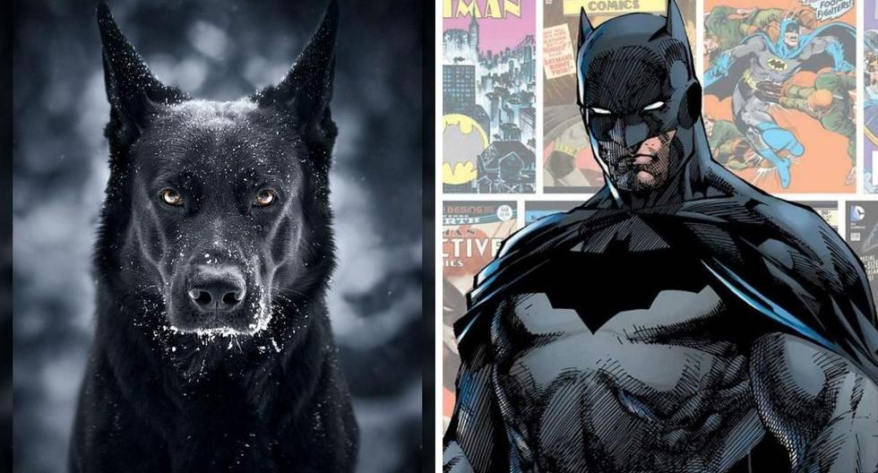 Brick y Batman en una misma foto. ¿Se parecen? (Foto: SWNS | Jelena Jovanović |DC Comics)