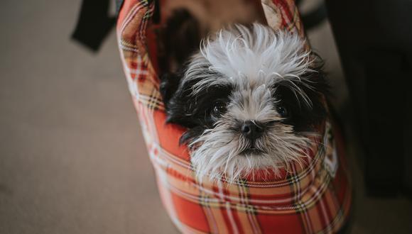 Cuando elijas convivir con un perro tienes que considerar si puedes darle el espacio necesario.