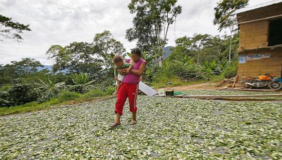 Monzón: Recuperarán suelos degradados por cultivo de coca