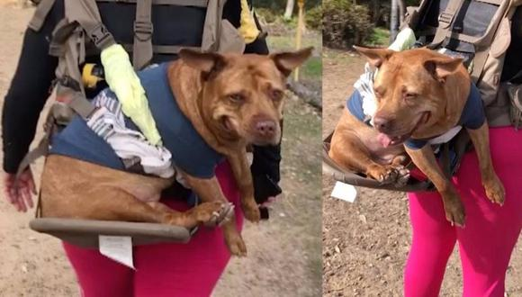 Esta perra anciana sigue yendo de excursión con su ama gracias a este invento de su dueña. (Foto: YOUTUBE / CATERS)
