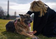 Los dos perros de Joe Biden se acomodan en la Casa Blanca | FOTOS