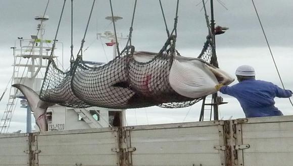 En Japón el 60 % quiere que se siga pescando ballenas