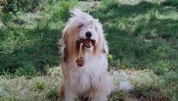 """Jack se convirtió en uno de los perros más famosos de la televisión por su participación en """"La familia Ingalls"""" (Foto: NBC)"""