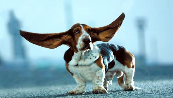 La tendencia actual es la de respetar la estética natural de la mascota (Foto:AP)
