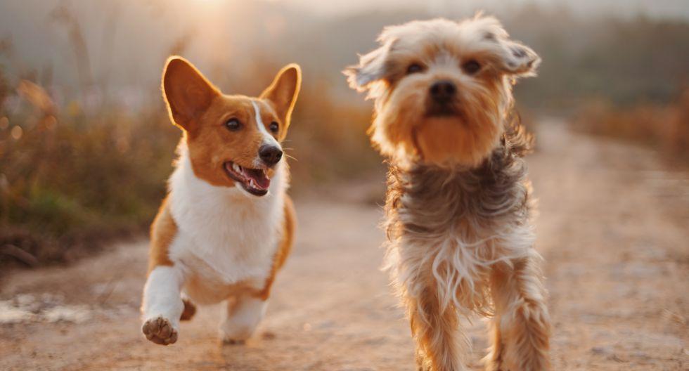 """""""Las mascotas te aceptan tal como eres. No les importa si estás flaca o gorda, si te arreglaste o estás en fachas"""", escribe Yrigoyen"""