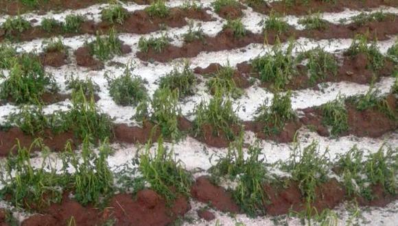 Puno: escasez de lluvias afecta 33 mil hectáreas de cultivos