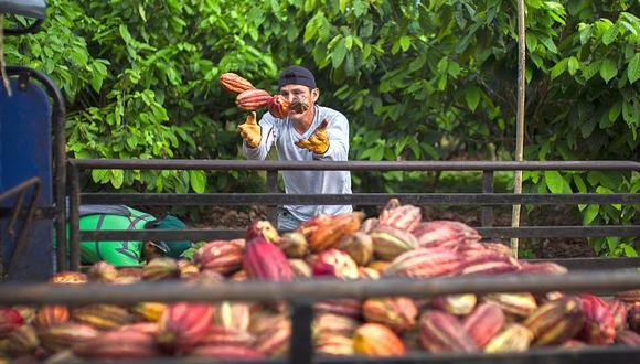 El Minagri logró censar 271 establecimientos relacionados al cacao. (Foto: GEC)