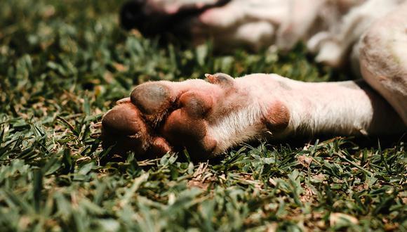 Que nuestro perro se lama mucho las patas es un indicio que algo no anda bien. (Pexels)