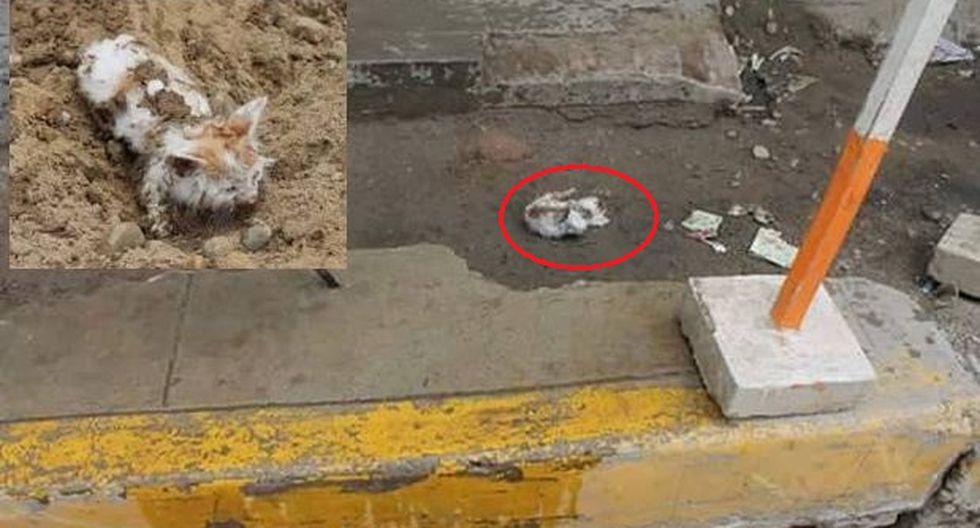 Quemó a gatos recién nacidos y los lanzó desde tercer piso