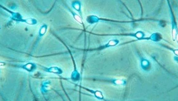Semen protege al VIH de los antivirales