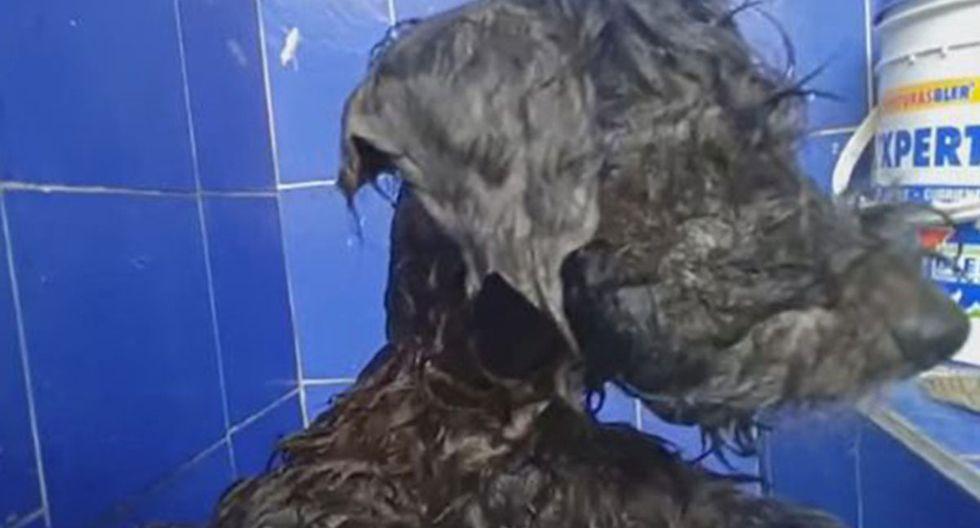 Mascota es abandonada y dueños cometen cruel acto para que no pueda volver a casa.   Foto: Captura YouTube