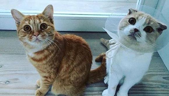 Los gatos de Ed Sheeran se están convirtiendo en celebridades de las redes sociales. (Foto: Instagram thewibbles)