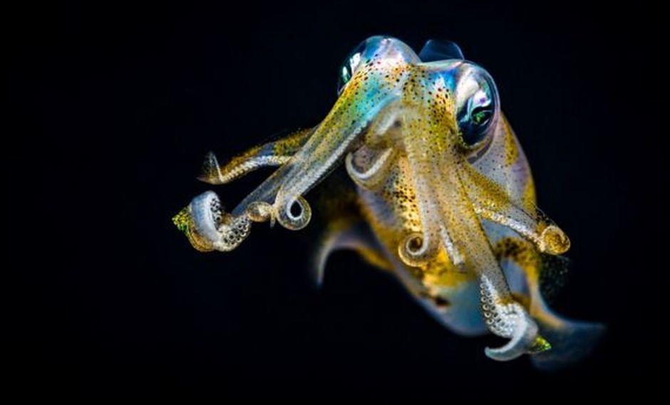Cualquier animal que pueda prosperar en los océanos de Europa y Encelado deberá moverse tan ágilmente como un calamar.