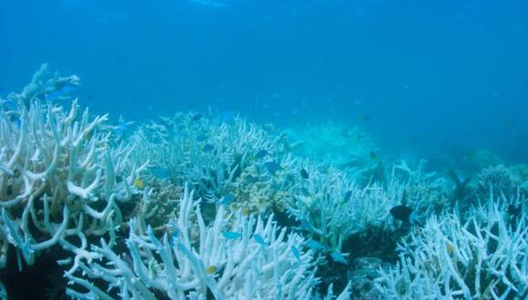 En el año 2016 también se registró una severa decoloración de la Gran Barrera de Coral. (Foto: AFP)