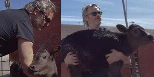 Joaquin Phoenix rescata de un matadero a una vaca y a su cría tras ganar el Óscar | Video