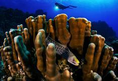 #ExpedicionesCientíficas   La bióloga que protege los arrecifes coralinos del caribe