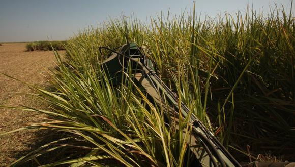 Científicos fabrican etanol sin usar maíz u otros cultivos