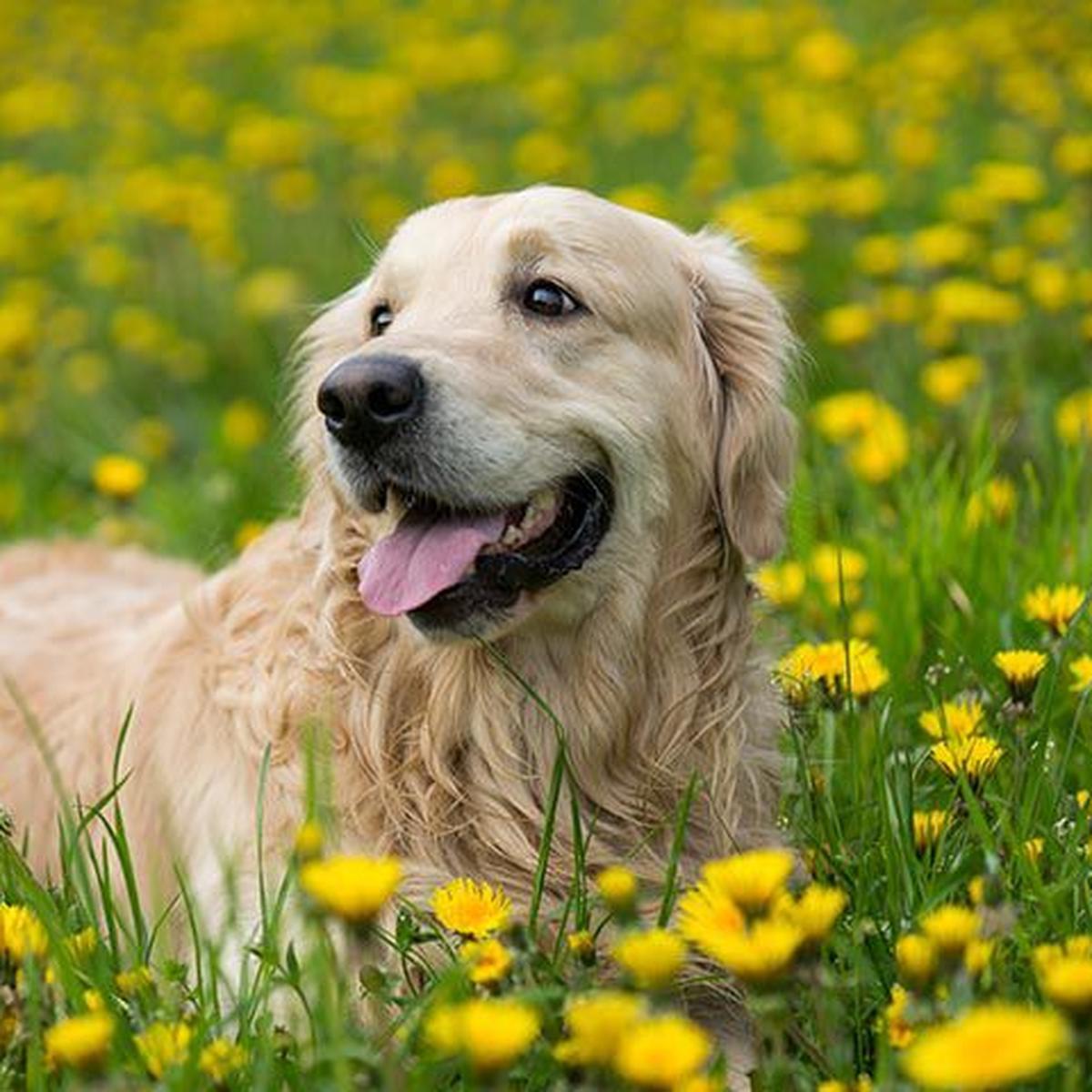 Cada Cuánto Tiempo Llevar A Mi Perro O Gato Al Veterinario Nnda Nnlt Respuestas Mag
