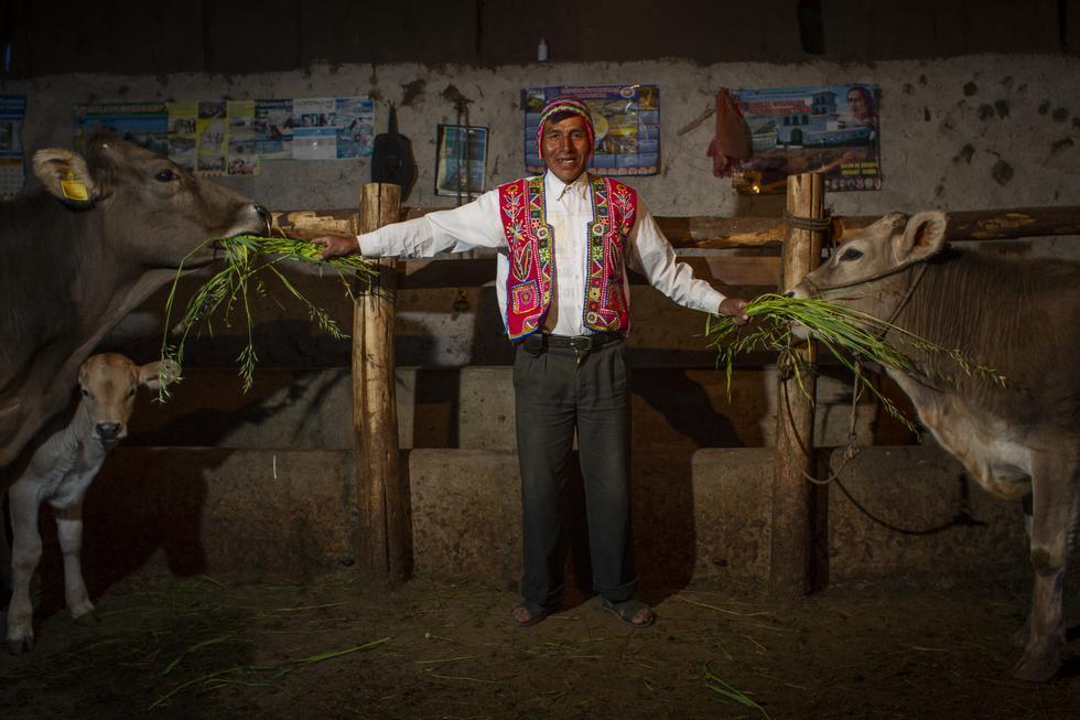 Yanaoca, en pleno departamento del Cusco, tan turístico por algunos lugares mundialmente conocidos y lugares tan alejados y desconocidos como esta imagen en la que un campesino muestra feliz como alimenta a su ganado en su pequeño establo familiar. (Foto: Richard Hirano)